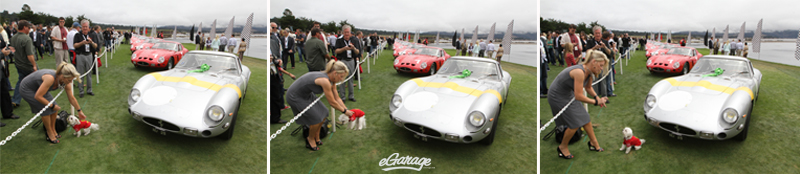 puppy with Ferrari 250 GTO Pebble Beach: Passion for Fashion